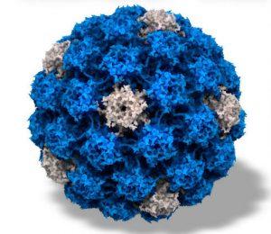 Virus papillomavirus